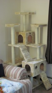 The completed cat tree