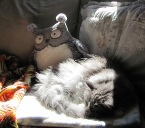 A cat and his owl. And the sunspot.