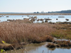 Looking across the marsh toward Pine Point