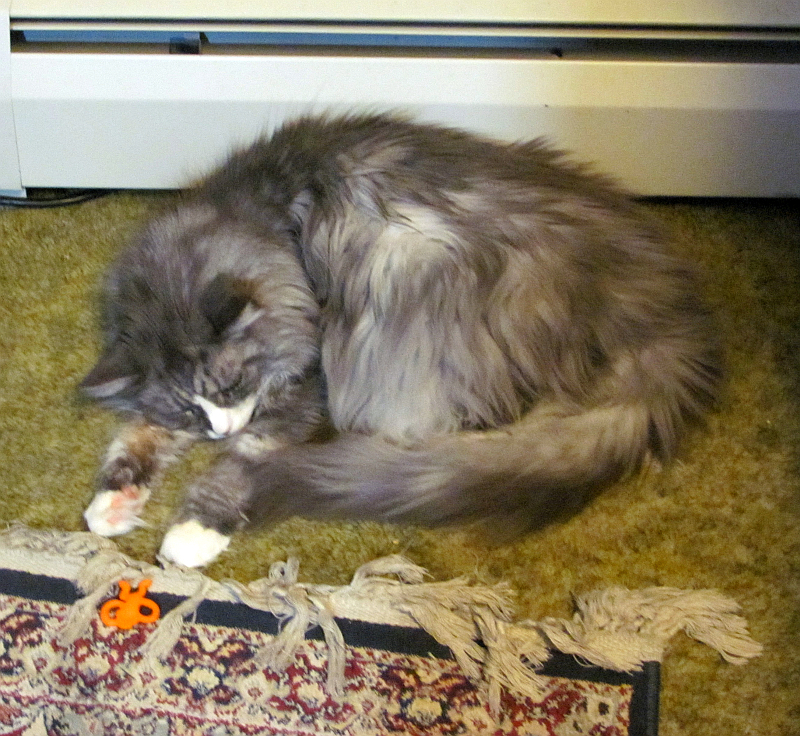 Mozart naps with the orange monkey in the Warm Spot. Photo by Sharon Lee