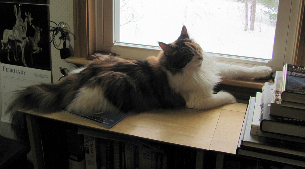 Napping in the window Photo by Sharon Lee