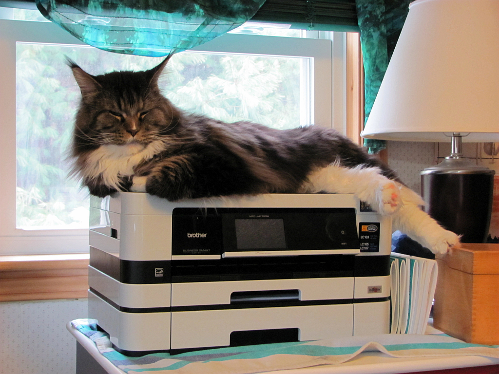 Trooper is on the case. Or the printer. Whatever. Photo by Sharon Lee