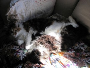 The sunspot and the Quillow, with coon cats.