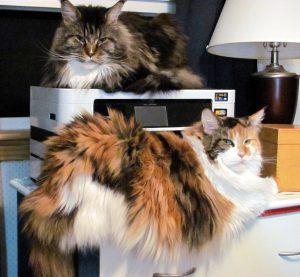 Cats prepare to print manuscript May 21 2016
